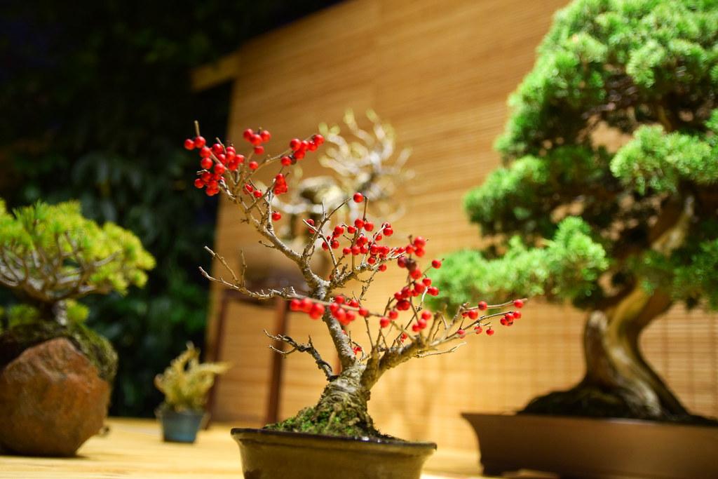 cadou bonsai